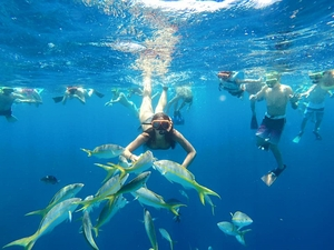 Grand Turk Marine Park Reef Snorkel Excursion