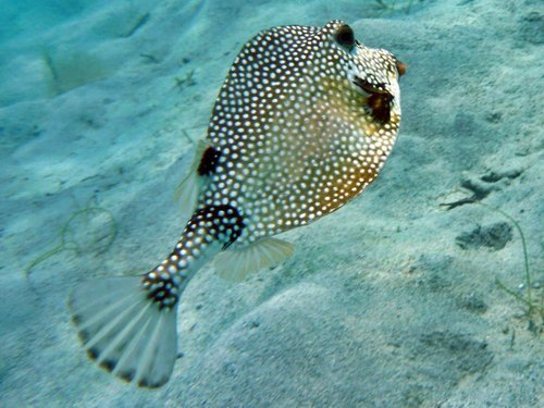 Grand Cayman  George Town snorkeling Booking