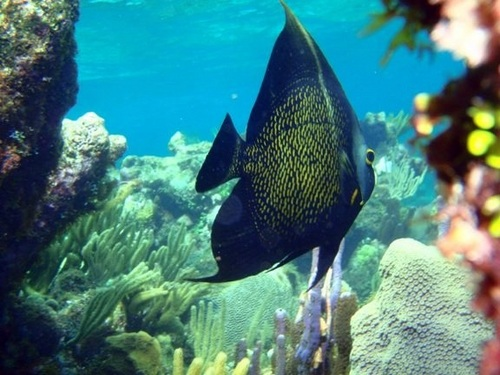 Cayman Island captains choice snorkel Trip Cost