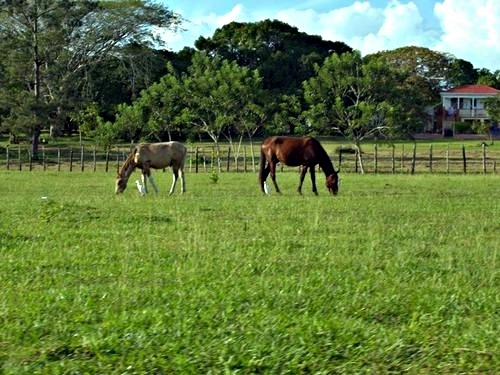 Belize horseback riding Cruise Excursion Tickets