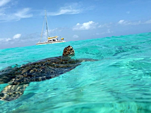 Curacao guided snorkel Excursion Reviews