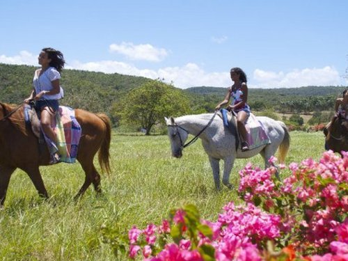Montego Bay ocean swim with horses Booking