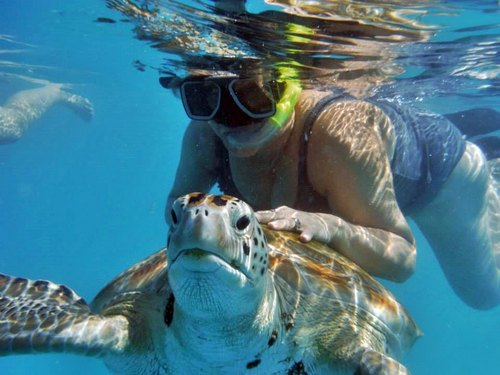 Barbados snorkel from boat Prices