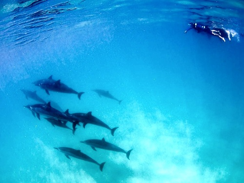 Oahu (Honolulu) snorkel with dolphins Excursion Prices
