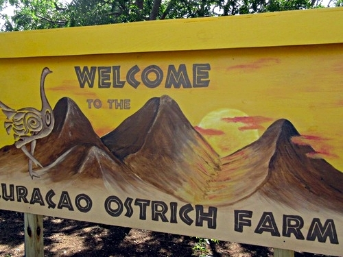 Curacao Willemstad ostrich farm Tour Tickets