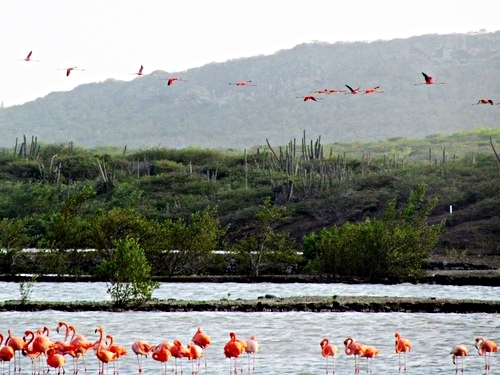 Curacao Willemstad flamingos Trip Tickets