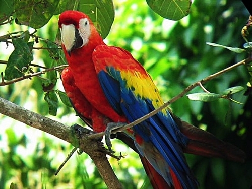Puerto Caldera jungle rainforest Tour Cost