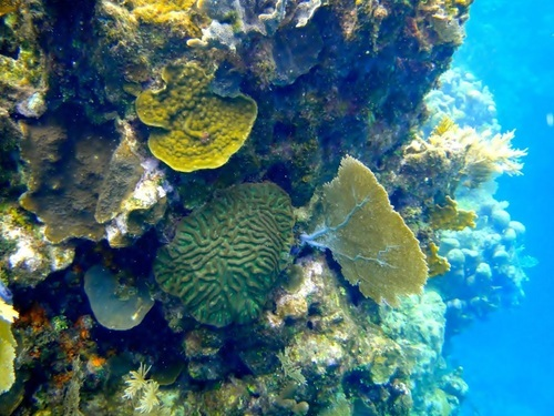 Roatan West End coral reef Tour Booking