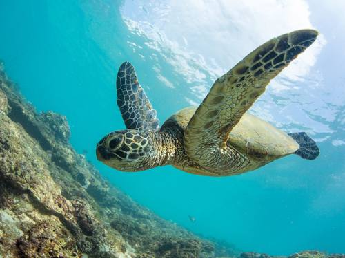 Bonaire sail and snorkel Trip Tickets