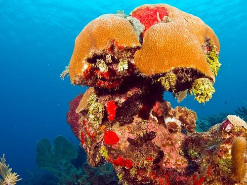 Roatan certified SCUBA diving Trip