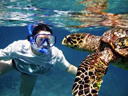 Belize coral reefs Excursion Tickets