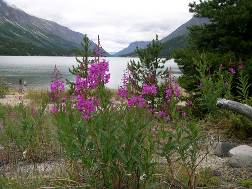 Haines Alaska Nature sightseeing Excursion Reservations