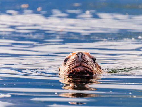 Haines Scenic Tour Tickets