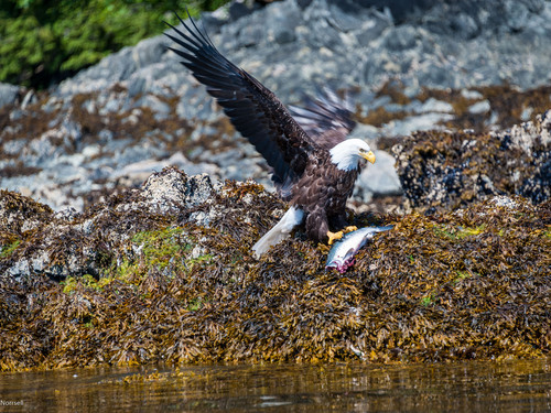 Haines  Alaska Kayaking Excursion Cost