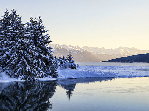 Haines wildlife photography Excursion Reservations