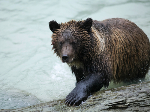 Haines Alaska wildlife photography Excursion Cost