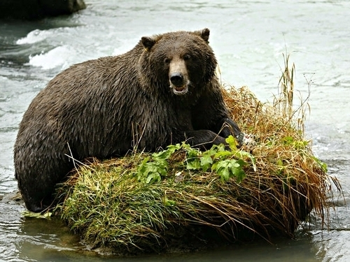 Haines wildlife photography Cruise Excursion Prices