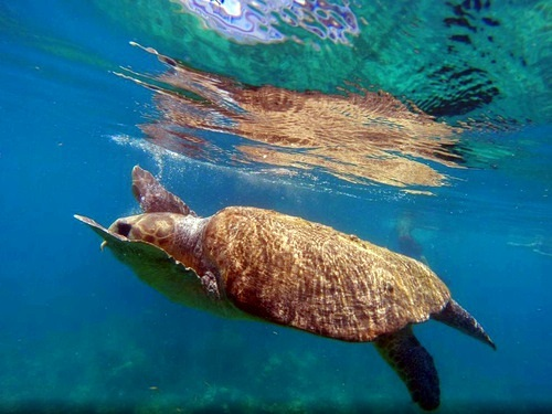 Key West  Florida Fury snorkel Excursion Prices