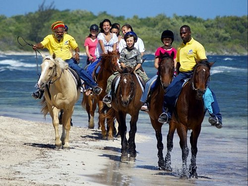 Falmouth horse riding through water Reviews