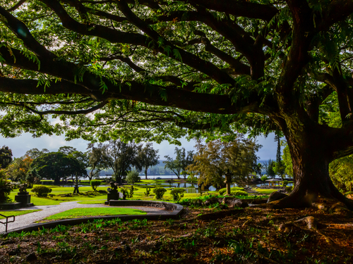 Hilo (Big Island) Honoli'i Sightseeing Excursion Reservations