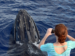 Hilo Whale Watching and Ocean Exploration Excursion