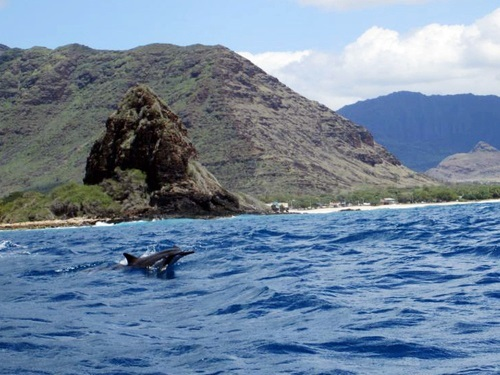 Oahu (Honolulu) Hawaii Humpback whale Cruise Excursion Booking