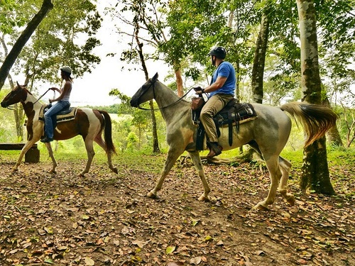 Roatan Honduras jungle horse riding Tour Tickets