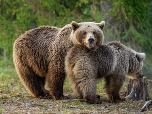 Icy Strait Exclusive Wildlife and Bear Excursion