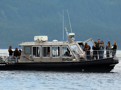Icy Strait (Hoonah) black bear Excursion Prices