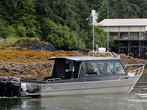 Icy Strait (Hoonah) brown Cruise Excursion Reviews
