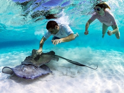 Grand Cayman snorkeling Excursion Prices