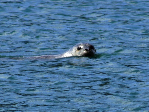 Juneau  Alaska / USA seal Tour Reviews
