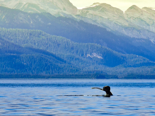 Juneau Humpback Trip Tickets