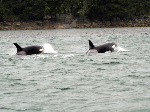 Juneau Alaska / USA Marine life Tour Booking