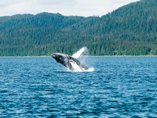 Juneau Alaska / USA Orcas Trip Prices