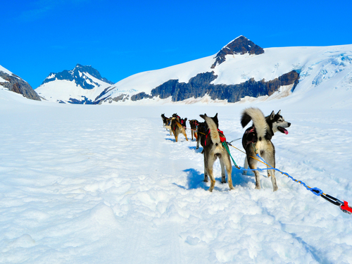 Juneau dog mushing Cruise Excursion Cost