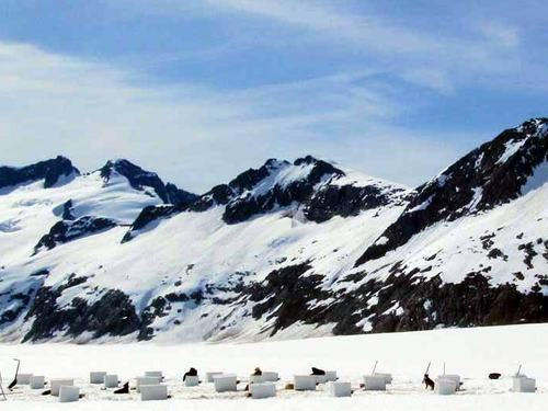 Juneau dog sled Shore Excursion Reservations