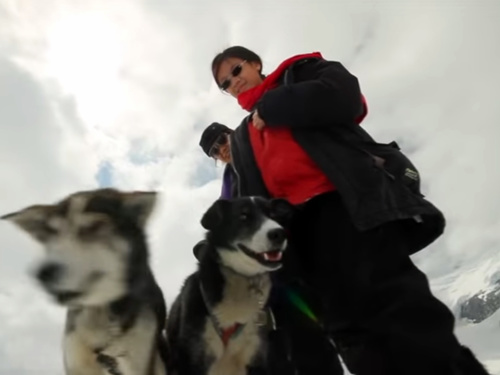 Juneau Alaska dog mushing Excursion Reservations