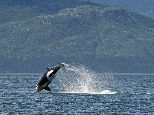 Juneau Alaska whale flightseeing Cruise Excursion Cost