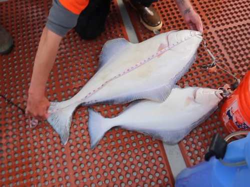 Juneau halibut fishing Cruise Excursion Reservations