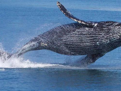 Juneau whale watching Trip Tickets