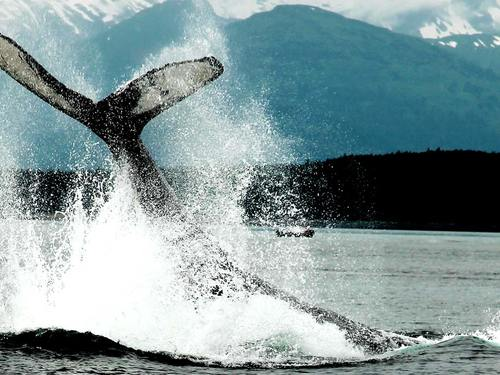 Juneau whale sightseeing Tour Reviews