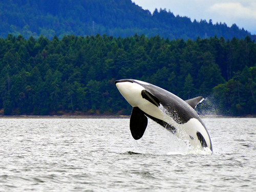 Juneau whale watching Excursion Prices