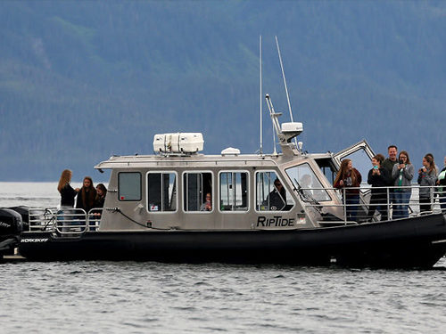 Juneau Alaska whale watching Shore Excursion Booking