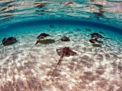 Grand Cayman stingray snorkel Cruise Excursion Booking