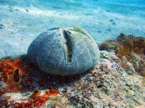 Barbados snorkel with turtles Prices