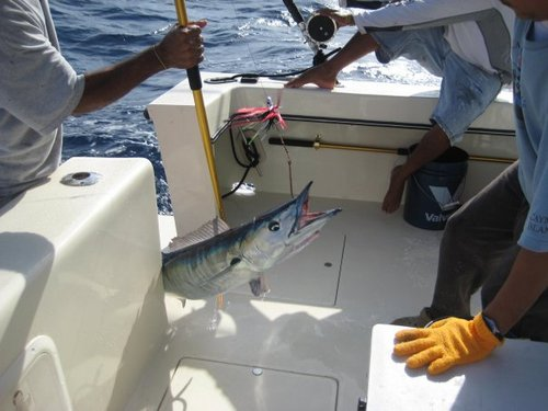 Grand Cayman  Grand Cayman (George Town) reef fishing Reviews