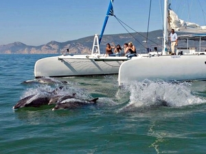 Lisbon Wild Dolphin Encounter and Setubal Sightseeing Excursion