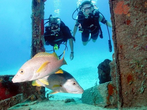 Nassau perfect for all divers Cruise Excursion