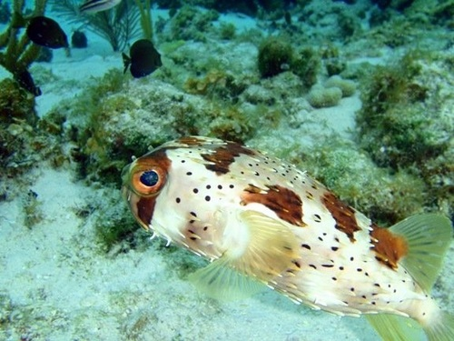 George Town stingray city and reef snorkel Shore Excursion Prices